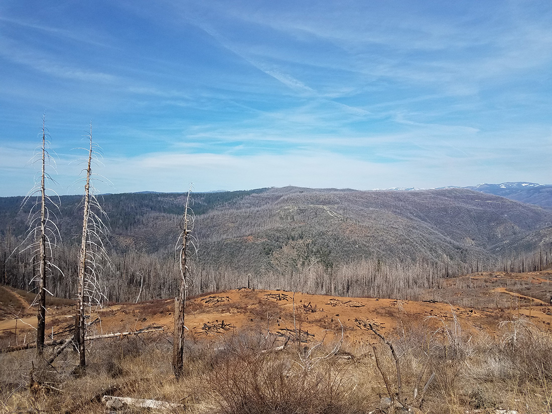 An intense wildfire ripped through this canyon in California, killing all the trees and leaving behind patches of barren land.