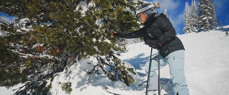 Melissa Jenkins inspecting whitebark pine