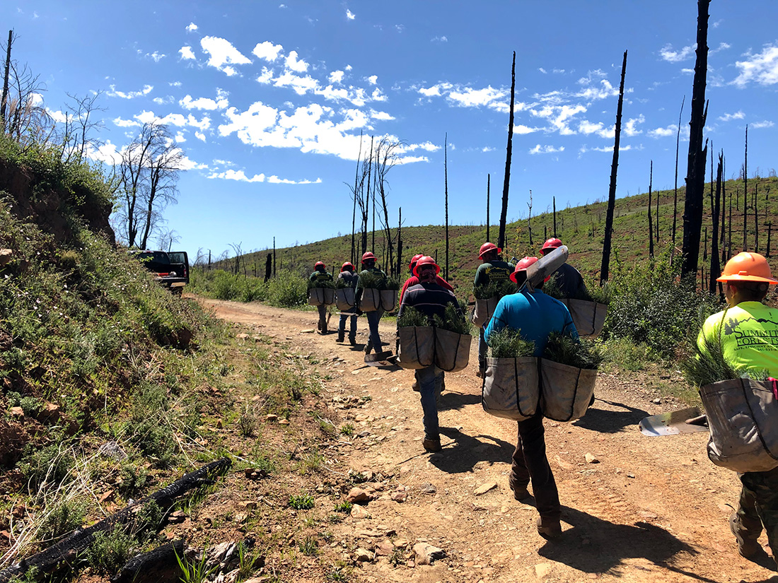 The planting crew at the Bureau of Land Management site this past spring loads their planting bags with seedlings from the tree cooler and heads back out to plant in the burn.