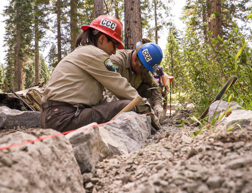 American Forests Statement on American Jobs Plan
