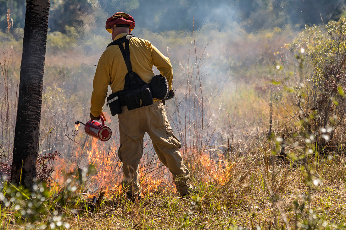 A lot of forestry work is seasonal, including fighting wildfires, growing trees in nurseries and using prescribed burns to manage forests, as is seen here