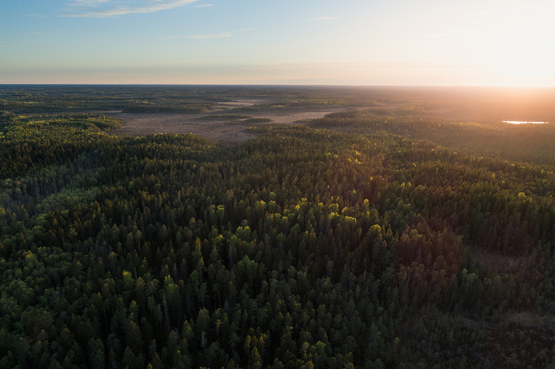 Forests, and other natural solutions, can account for more than one-third of the global reduction in carbon emissions that is needed by 2030.