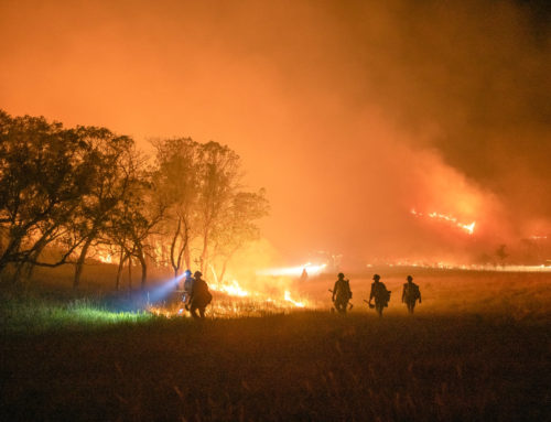 American Forests' Statement on the Western Wildfires