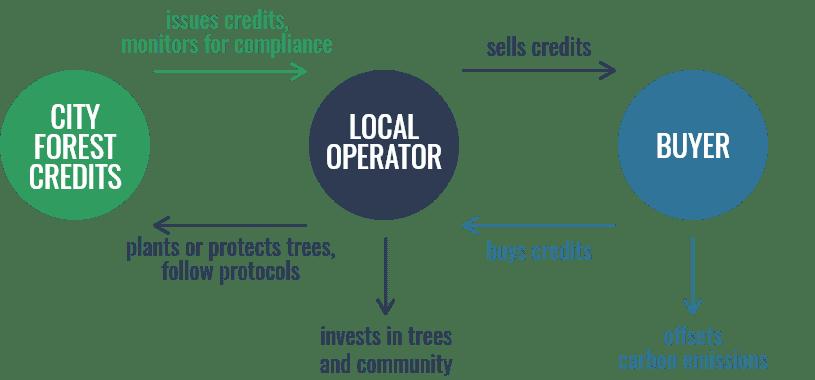 CFC Urban Forest Carbon Credits Diagram