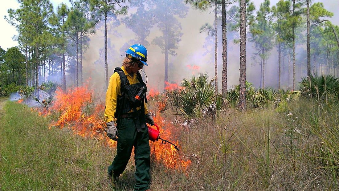 With 1.5 to 2.5 million acres of controlled burns a year, Florida's fire culture sets itself apart.