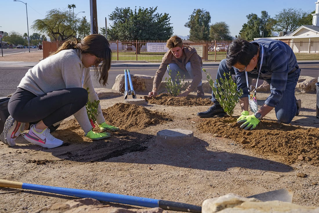 The city of Phoenix is committed to planting trees to help double its vegetative land cover to 25% over the next decade.
