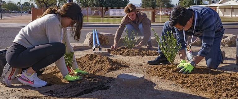 Volunteers planting in Phoenix