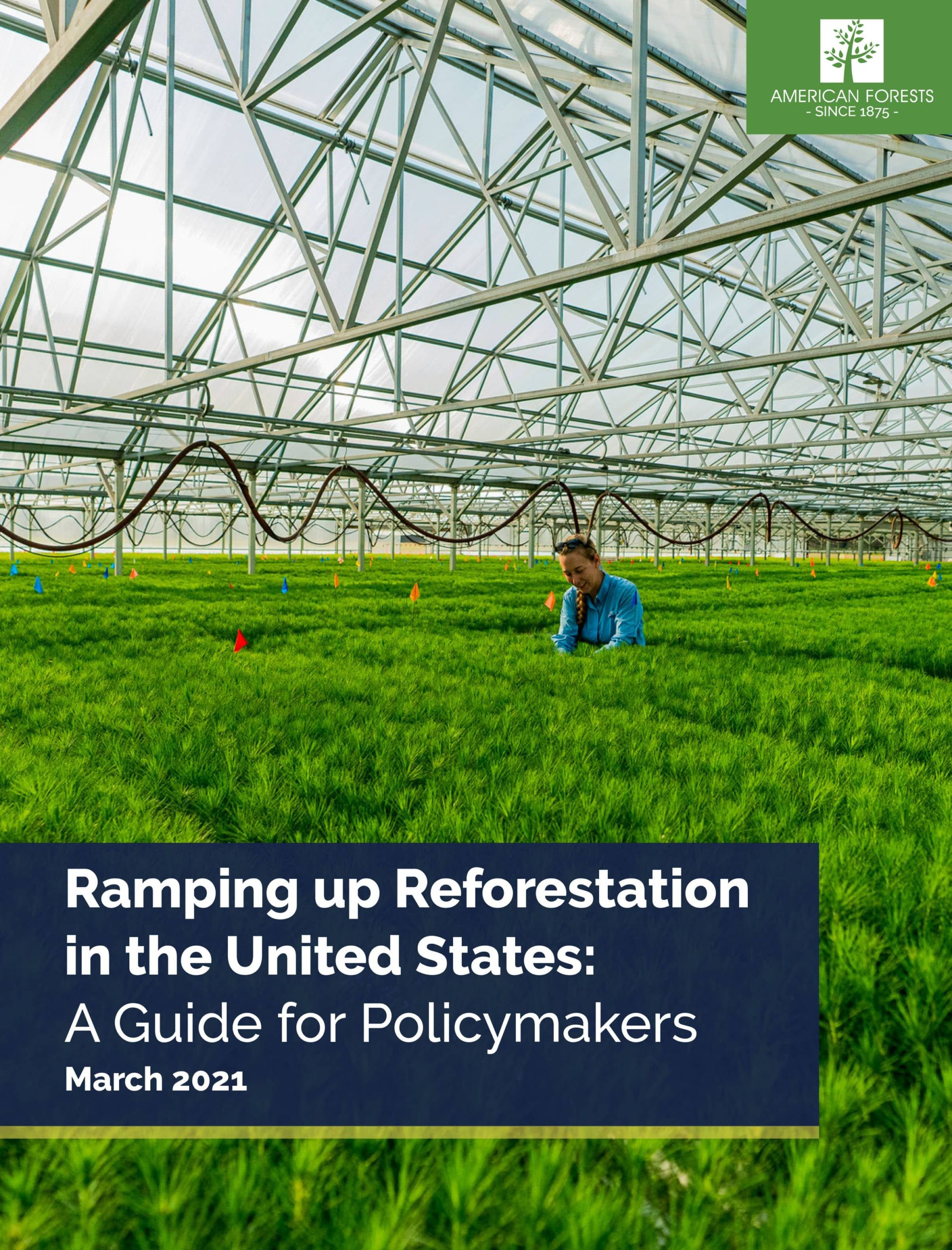 Cover of the Ramping Up Reforestation report