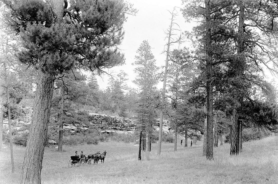 This 1905 photo from the southern rim of the Grand Canyon shows the parklike conditions once common in western forests.
