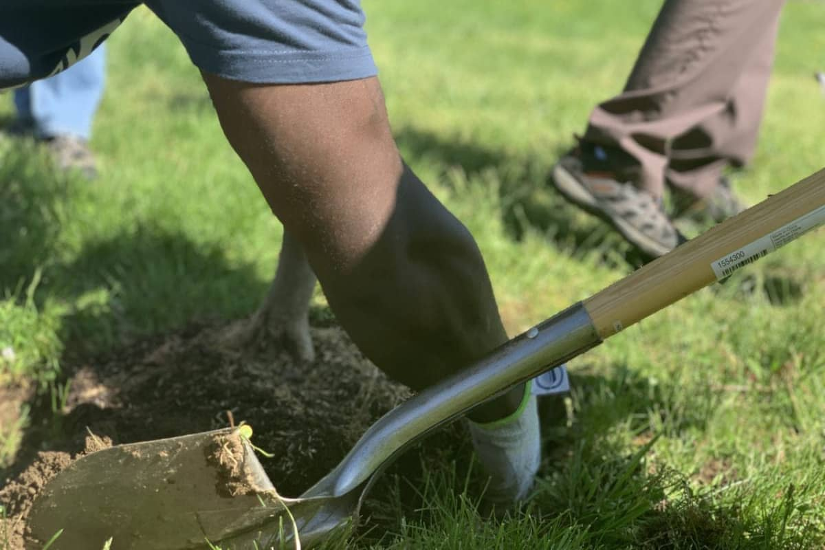 A shovel lies next to a while while an arm pulls soil out of it for planting.