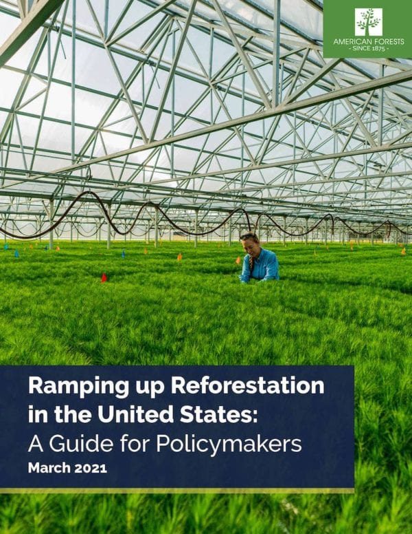 Ramping Up Reforestation in the United States: A Guide for Policymakers report cover