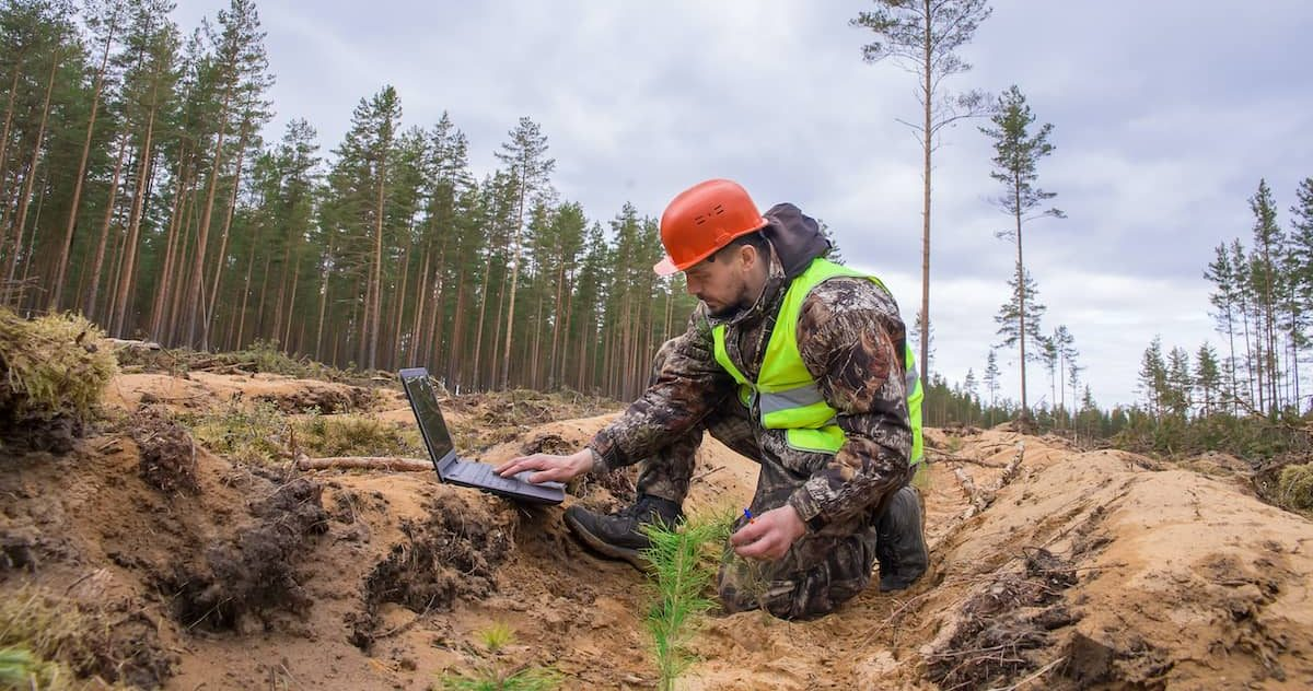 A forester in a helmet and vest checks the quality of tree planting.