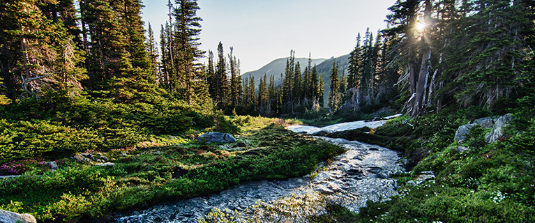 More than half of America's drinking water originates in forests — mainly from the rivers and streams that run through them.