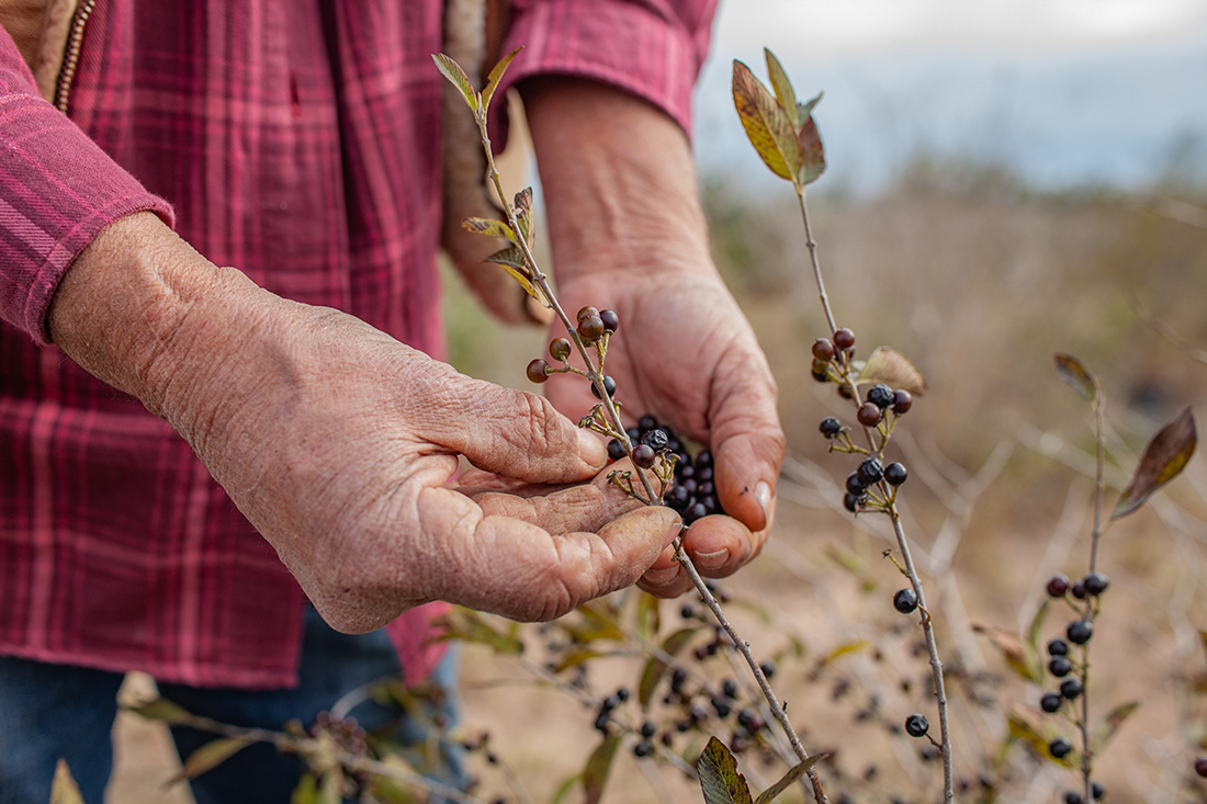 Collecting seeds of native species is the first step in propagating trees that will restore the threatened habitats in this area.