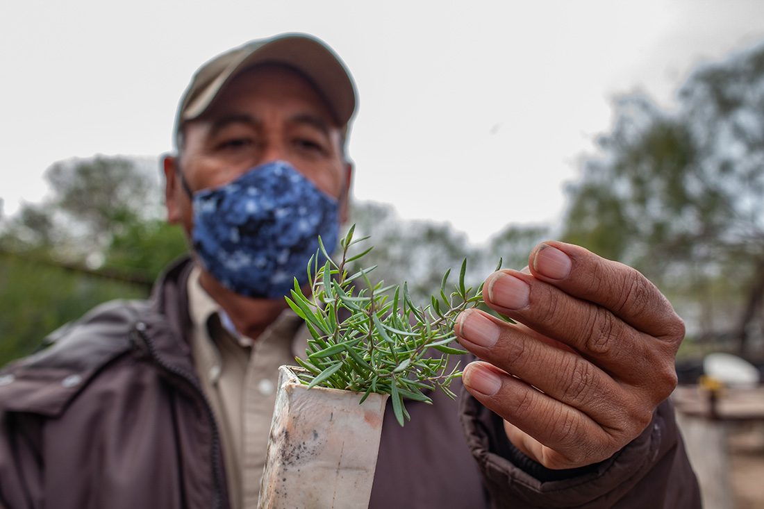 Florentino Caldera from USFWS examines seedlings in the nursery at the Perez Ranch.