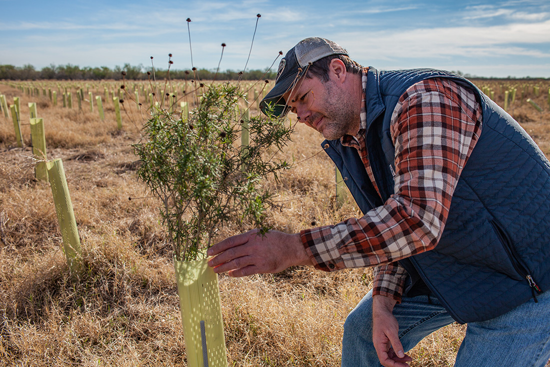 Jon Dale, senior manager for American Forests in the Lower Rio Grande Valley, checks on shelter tubes, which protect seedlings from herbivores and provide soil moisture.