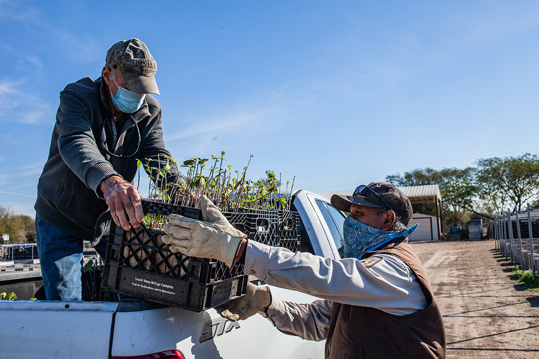 Mike Heep, a private nursery owner, delivers seedlings to a USFWS site in the Valley.