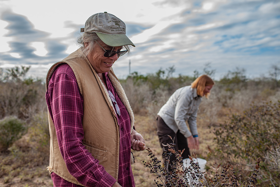 Betty Perez runs a ranch in La Joya, Texas, that has been in her family for generations. She is helping restore wild areas of the Lower Rio Grande Valley. Here, Perez and Kim Wahl- Villarreal, formerly with the U.S. Fish and Wildlife Service in the Valley, are picking seeds on the Perez Ranch.