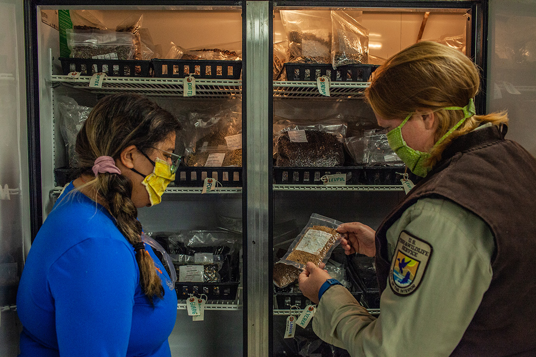 Alisa Gonzalez from the Student Conservation Association (SCA) and Wahl-Villarreal look through seed storage at a USFWS site.