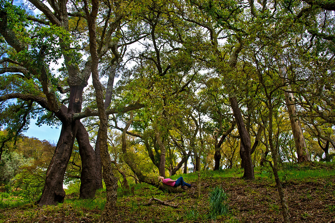 Lying on the trunk of an oak tree, Radford listens to a soundscape of birdsong and insects humming. A growing body of research shows that time spent in nature helps boost people's moods and reduces anxiety and stress. Companies hire her as a nature coach to help their employees manage stress through time spent outdoors.