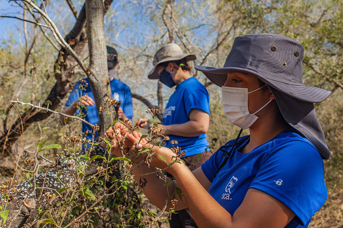 Volunteers from SCA pick seeds at the Santa Ana National Wildlife Refuge in Alamo, Texas.